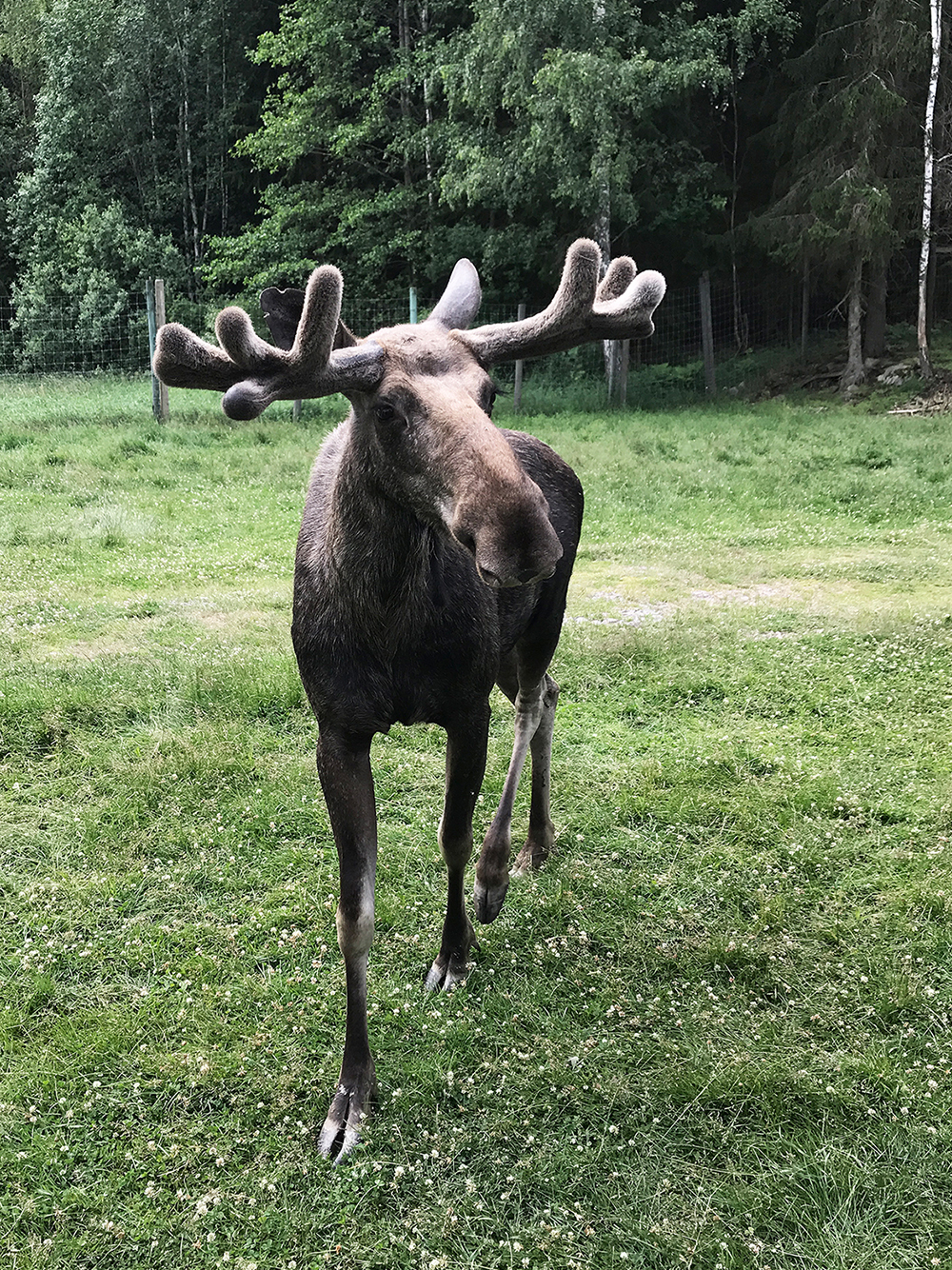 VisitSmåland-Vennebjörke12